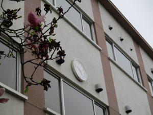 校舎時計と木蓮の花