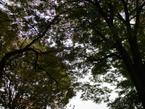 理事会20171118の日の校庭から見上げた空