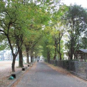 理事会20171118の日の校内の道