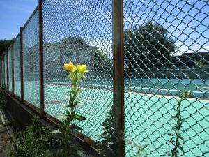 プールの青と空の青、そして黄色花。視覚の清涼剤にほっこりします。