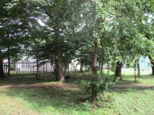 視線を前方へ移すと、目的地のE棟が見えてきます。その手前には中庭、憩いの空間です。