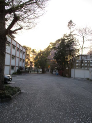 校舎と夕日の共演、そして・・・校内のそこここに桜の花びら。