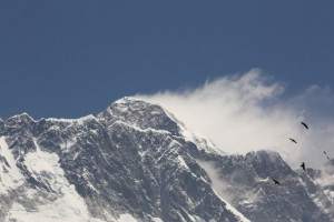 エベレストを目指す渡り鳥
